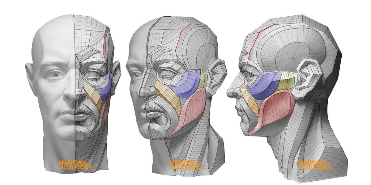 couverture sur les meilleurs livres d'anatomie pour la sculpture 3D